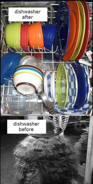 dishwasherafter_before
